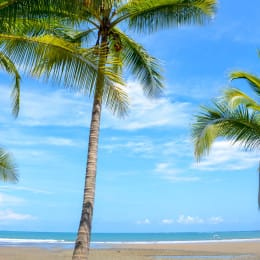 costa-rica-tree