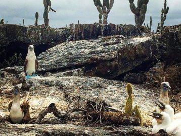 Galapagos Marine Biology Trip