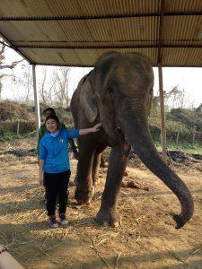 Nepal Elephant project